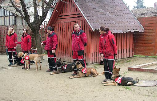 A kutyusok fegyelmezetten várják az utasításokat.